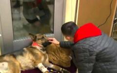 Cane protegge ragazzo e gli salva la vita