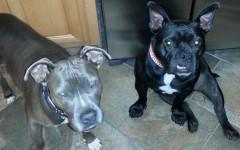 Cane mangiava pietre: storia a lieto fine per Rocky
