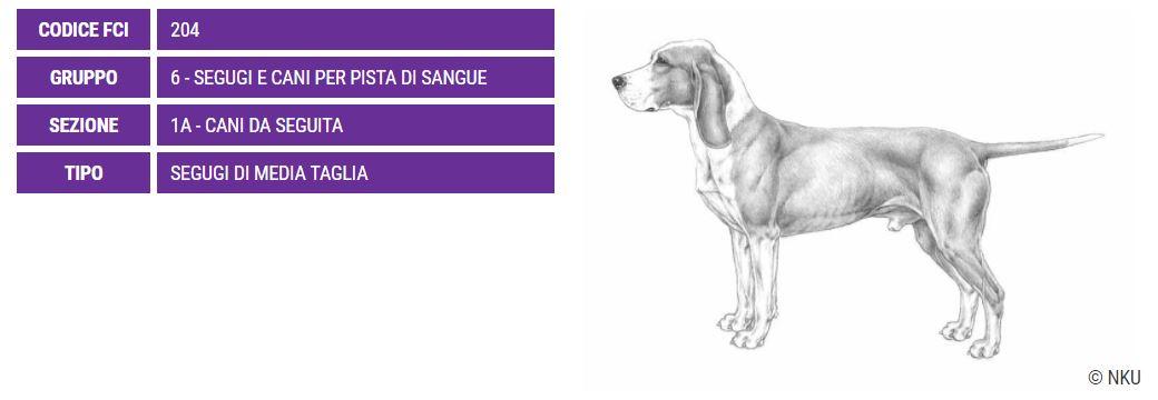 Sabueso Espagnol, carattere e prezzo - Razze cani