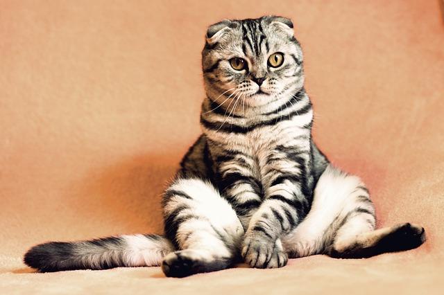 Gatto fissa il vuoto: perché lo fa?