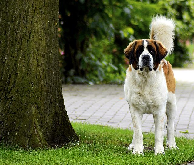 Cuanto vive un perro: la firme pregunta de los dueños