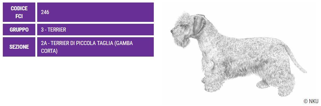Terrier boemo, carattere e prezzo - Razze cani