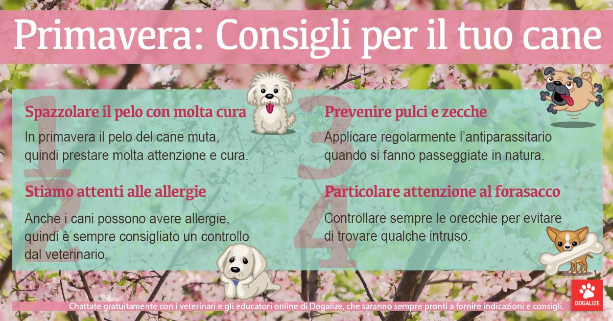 Infografica: consigli per la cura dei cani in primavera