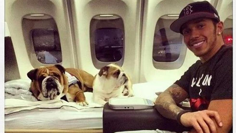 Lewis Hamilton Enjoys Time with His Bulldogs