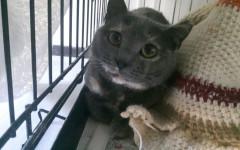 Minu' cerca casa, aiutiamola! Appello per adozione