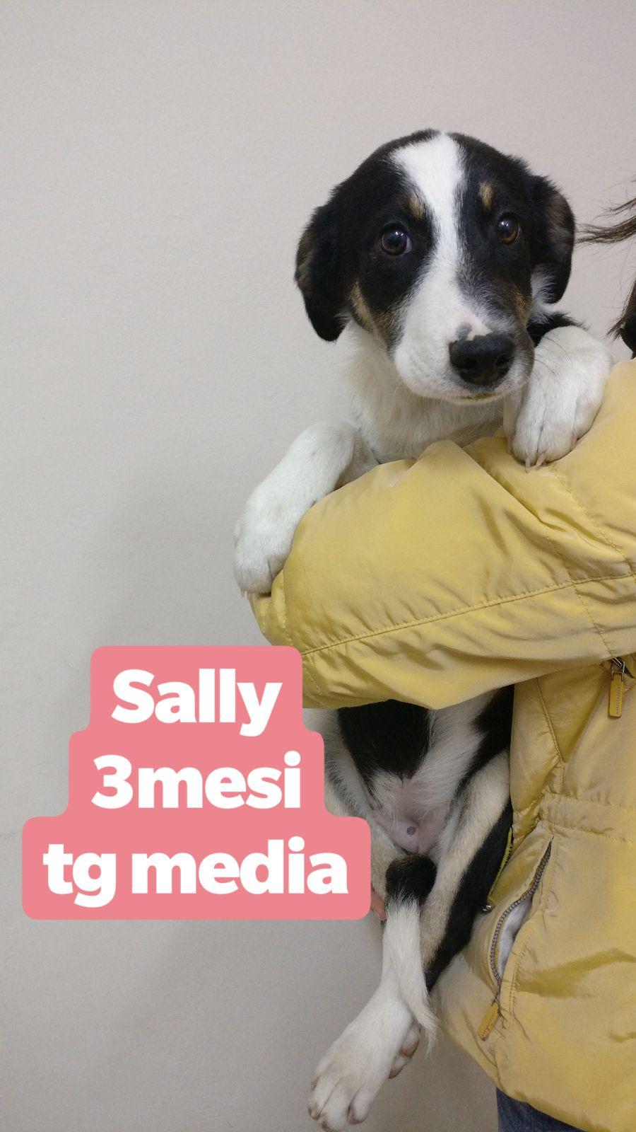 Sally cerca casa, aiutiamola! Appello per adozione