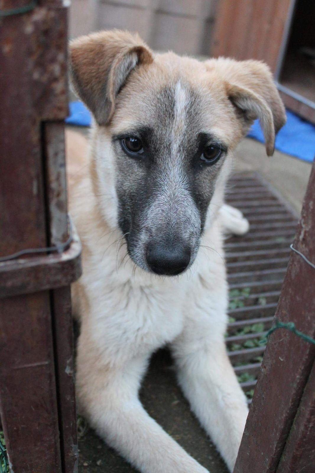 Vasco cerca casa: appello per adozione