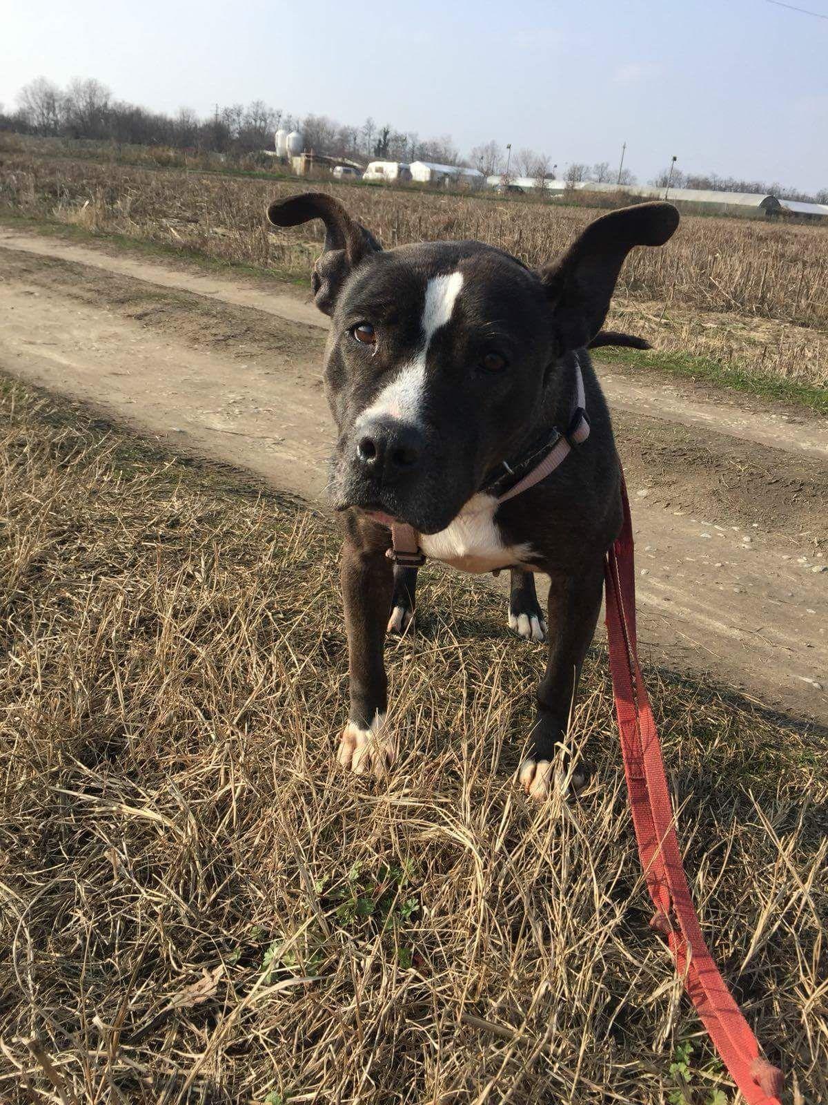 Zaida cerca casa: appello per adozione