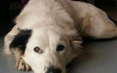 Kira cerca casa, aiutiamola! Appello per adozione