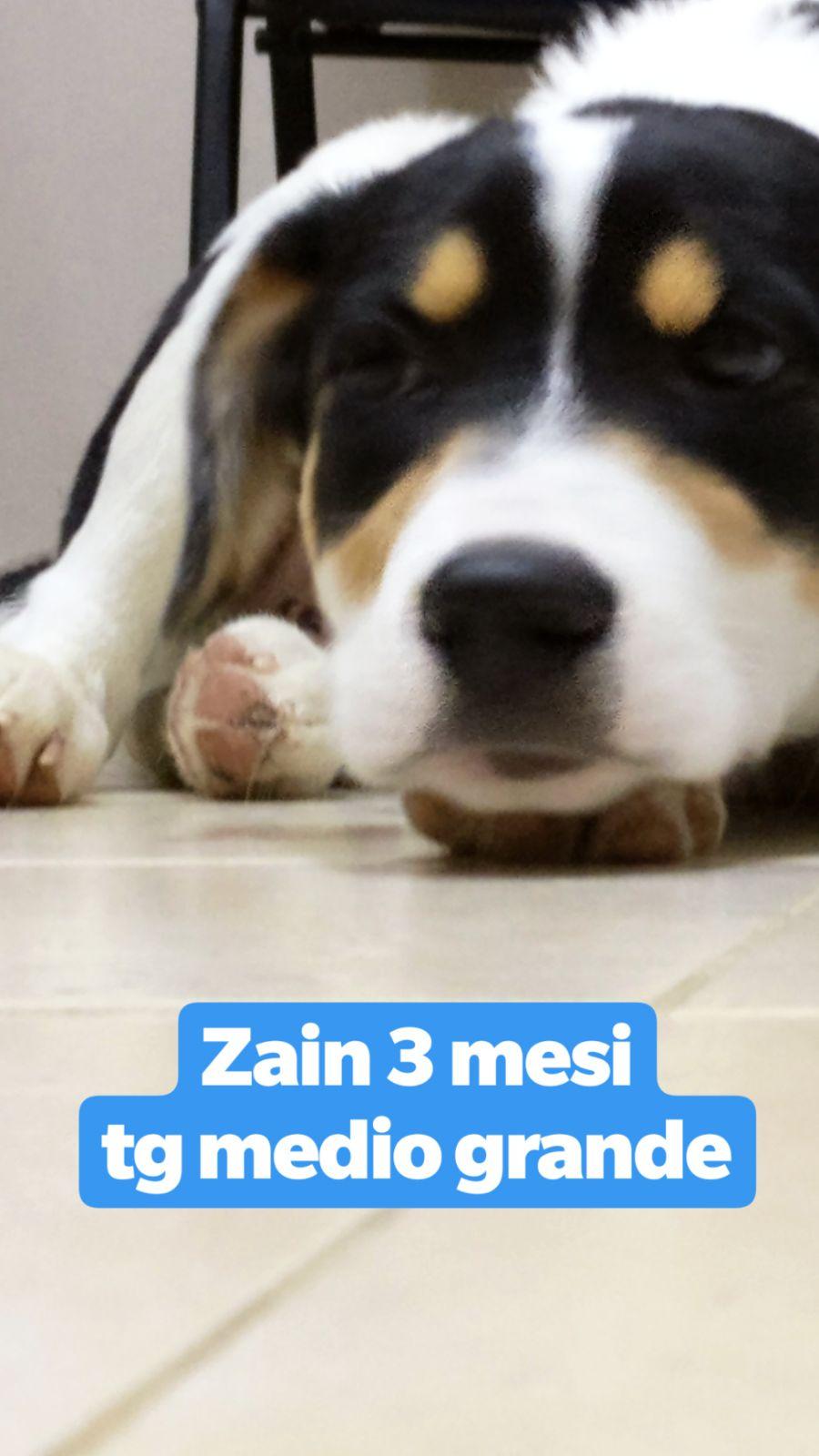 Zain cerca casa