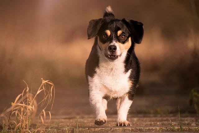 ¿Cómo desparasitar a tu perro? Lo que debes conocer