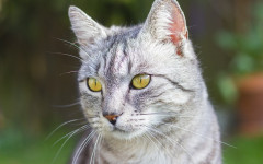 Cat Years to Human Years: How's the Math Done?