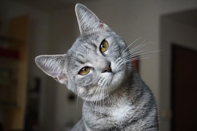 Gatto ci segue in bagno: vediamo insieme perché lo fa