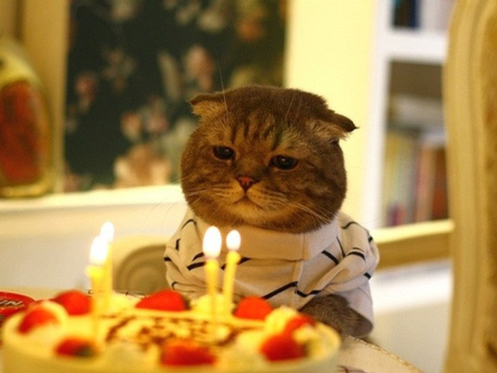 Cat Birthday: the many forms of the Cat Birthday