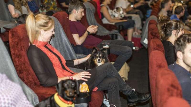 Cani al cinema: ultima moda o buona abitudine?