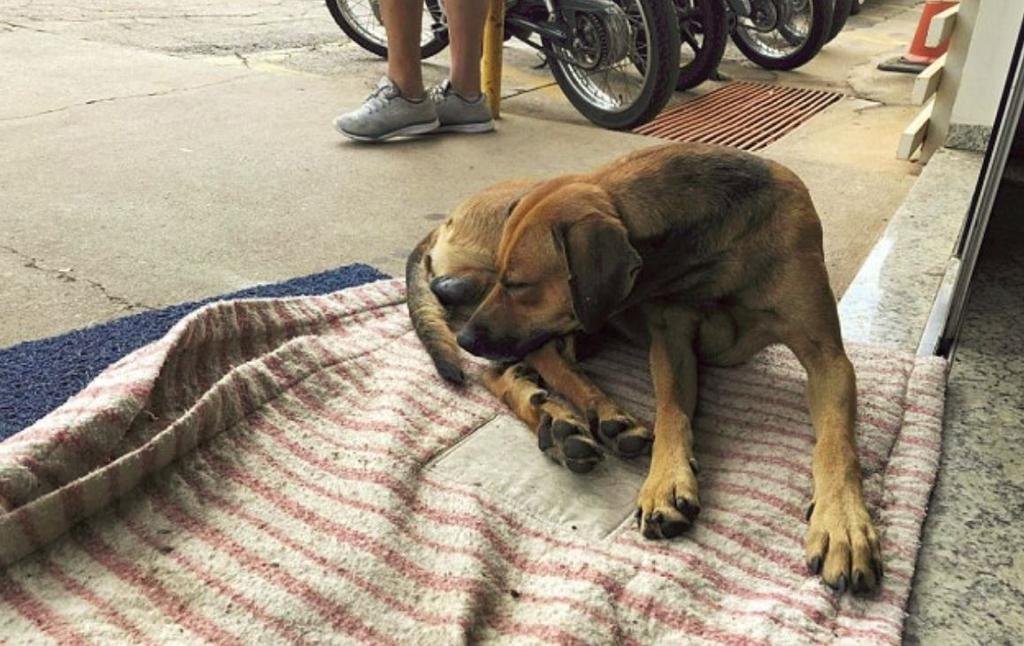 Cane aspetta il suo umano fuori dall'ospedale da 4 mesi