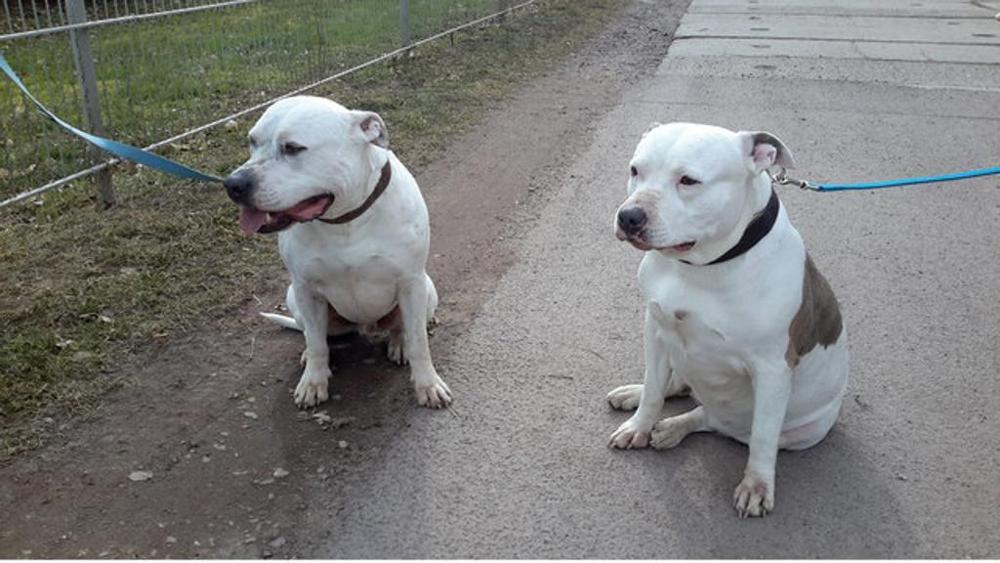 Cani scomparsi: il loro simpatico ritrovamento