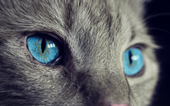 Cat's Eye: Interesting Facts About the Cat's Eye