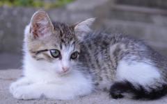Gatti ci corrompono con il loro miagolio, lo sapevi?