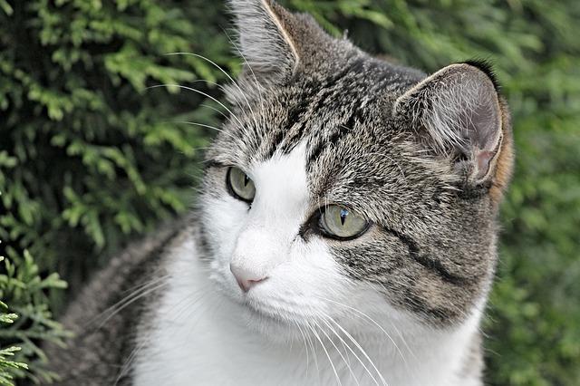 Perché il gatto scappa dopo aver utilizzato la lettiera?
