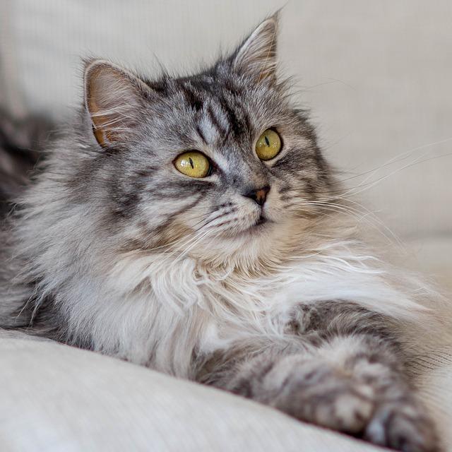 Almo Nature gatti: cibo naturale per i nostri pelosi