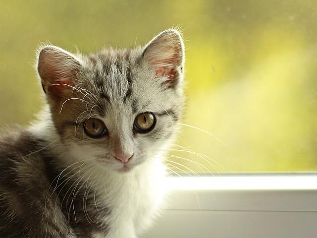 Gatti non amano dolci: vi siete mai chiesti perché?