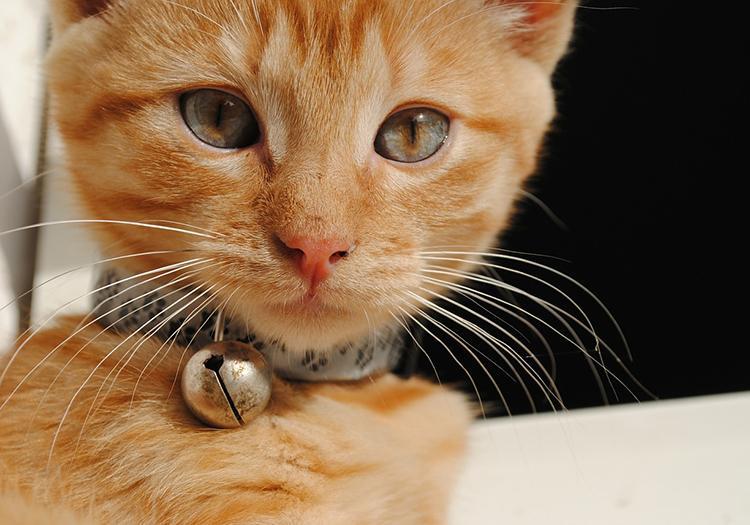 Collare con campanellino per gatti: perché non utilizzarlo?