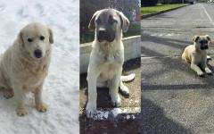Cuccioli cercano casa: appello per adozione