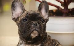 Cane muore in aereo: attenzione al trasporto dei pelosi