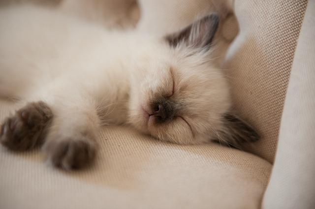 Difese immunitarie del gatto: come migliorarle?