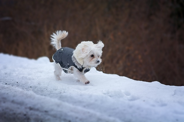 Dog Coats: Does Your Dog Really Need Dog Coats?
