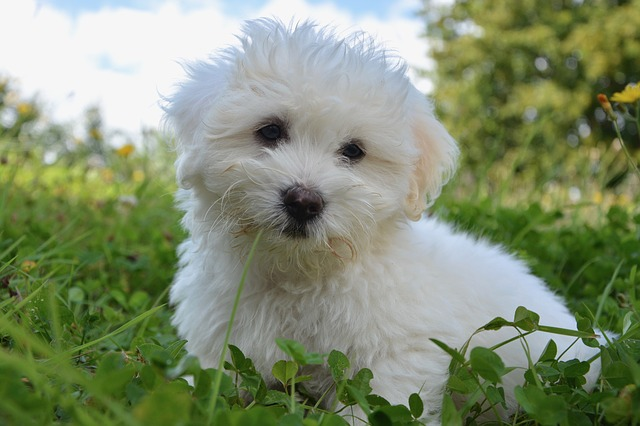Cesar alimenti per cani: caratteristiche e tipologia