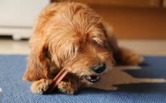 Almo Nature cani: cibo di qualità per i nostri pelosi