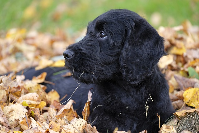 Aninimal Book: Hypoallergenic Dog Breeds: Dogs That Don't Shed - Dogalize