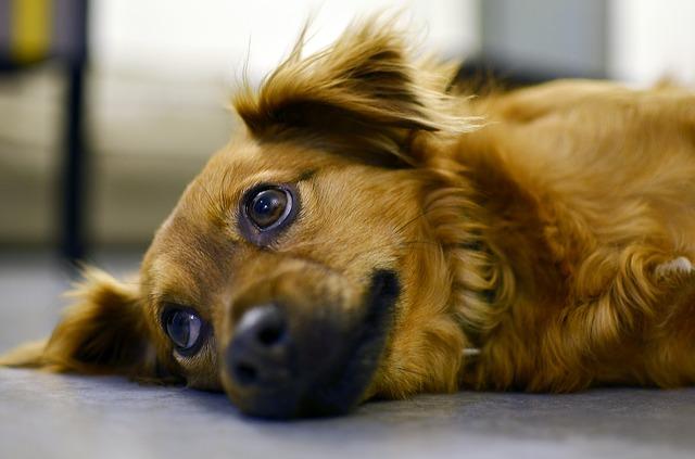 Strage di cani a San Sofia d'Epiro, tragico episodio