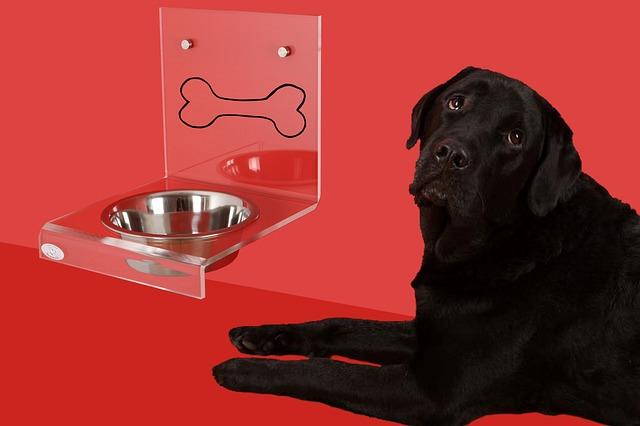 Perro bebe mucha agua: ¿será por algo malo?