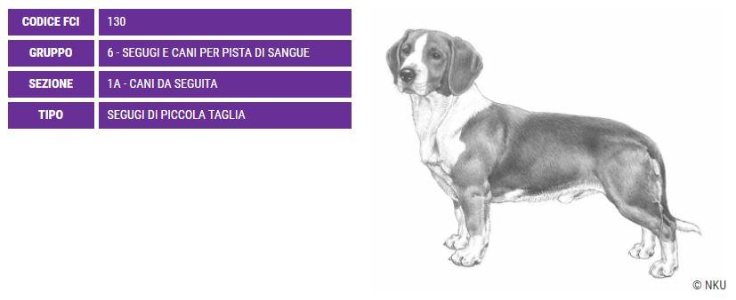 Drever, carattere e prezzo - Razze cani