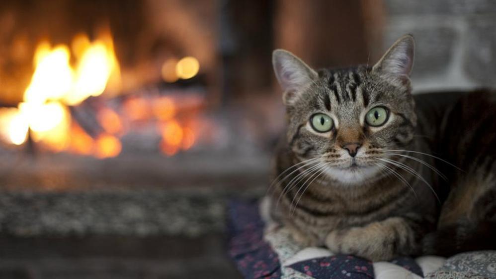Gatto salva famiglia da un incendio, un gesto eroico