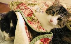 Trapianto renale nel gatto: donna spende 19 mila dollari