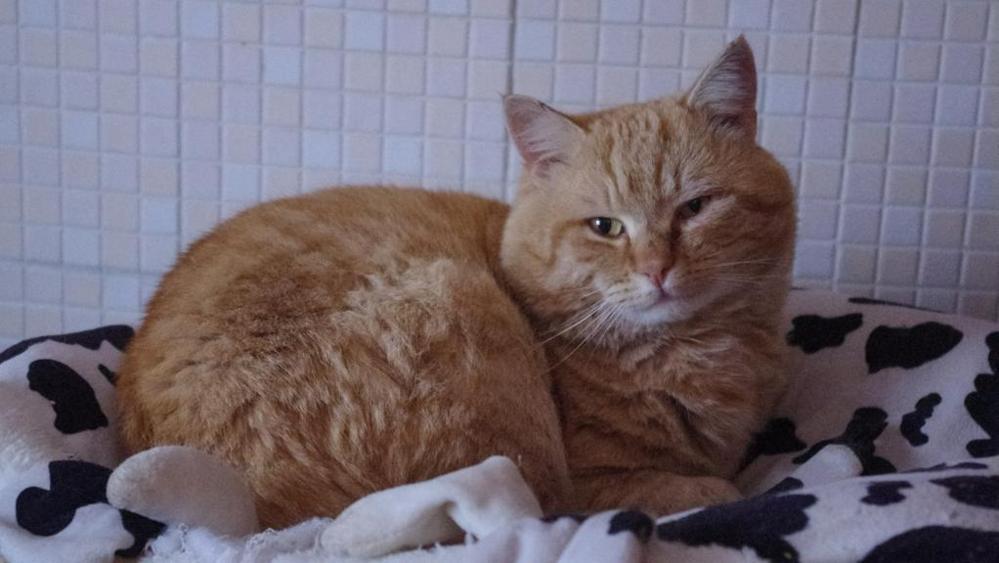Gatto ritrovato dopo 4 anni: lieto fine per Leo
