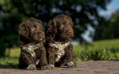 Cibo Eukanuba per cani: linee di prodotti per Fido