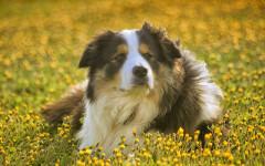 Hacer vomitar a un perro: un práctica que debes aprender