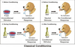 Pavlov Dog and Classical Conditioning