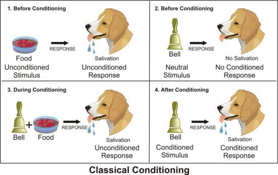 pavlov dog and classical conditioning who was pavlov dog dogalize