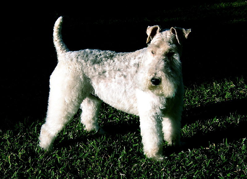 Perro de Tintín: un pequeño y amigable personaje