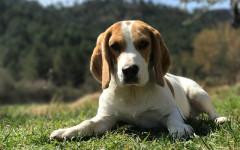 Eutanasia cani vietata su animali curabili: sentenza della Cassazione