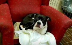 Poltrone per cani in un rifugio per farli sentire a casa