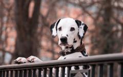 Disturbi ossessivo compulsivi dei cani: mito o realtà?