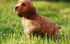 Schesir cani, prodotti di qualità per Fido