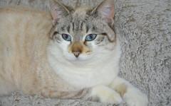 Stronghold gatos: todo sobre desparasitación